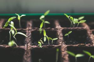 Small Business Fundraising Ideas: Avoiding Complex Securities Regulations
