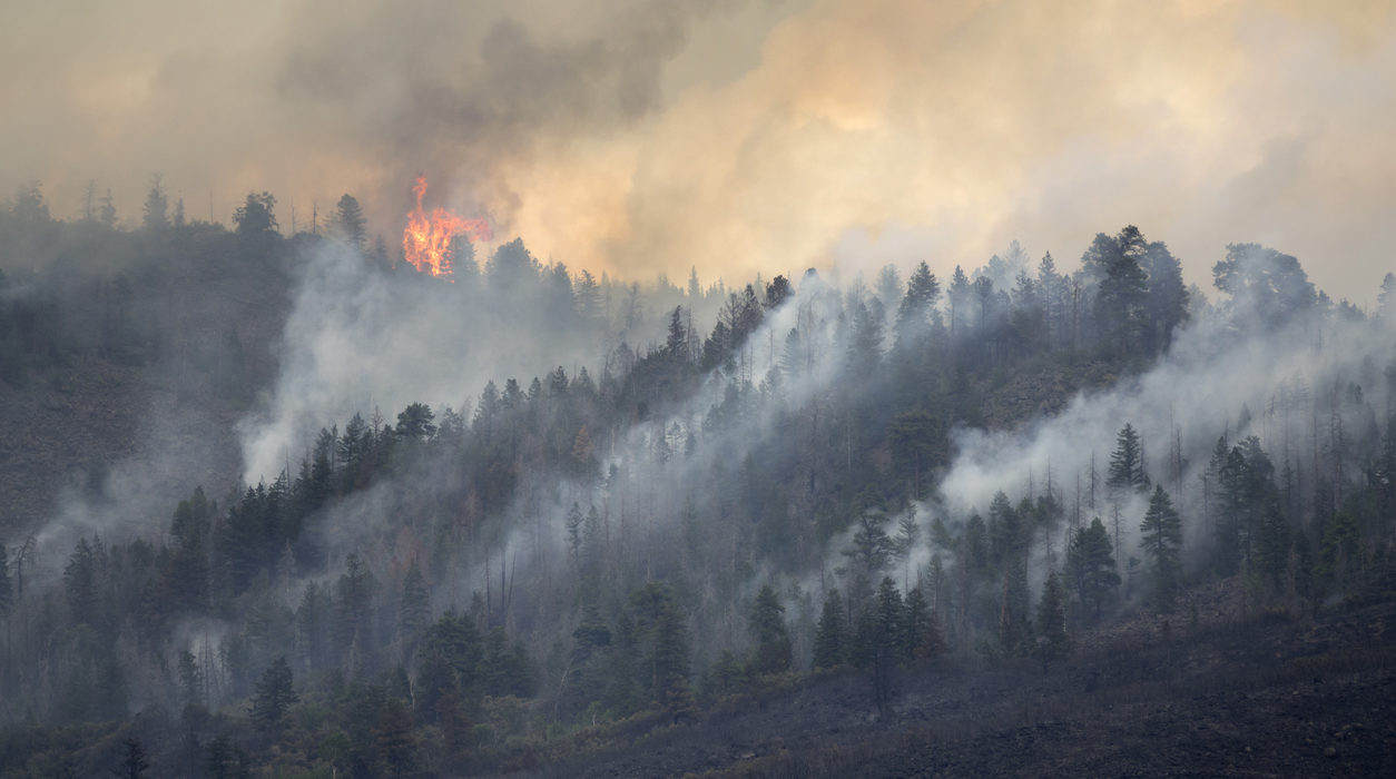 Wildfires, Renewable Resources, and Chapter 11: The Latest in the PG&E Story
