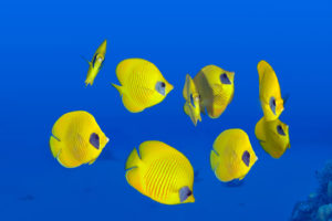 In re National Fish: Keeping Your D&O Insurer on the Hook in Chapter 7